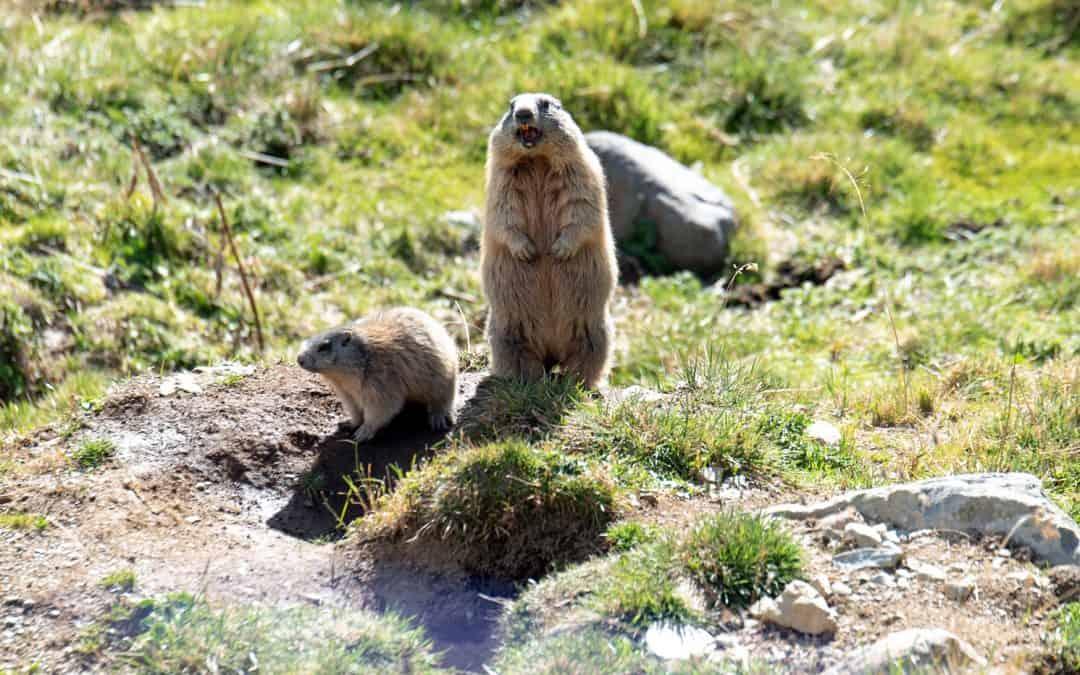 Mehr als 28.000 BürgerInnen fordern jetzt Schutz der letzten alpinen Freiräume